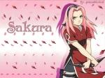 Young_Sakura-652920